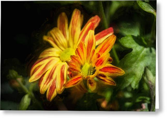 Asters Greeting Cards - Mums Chrysanthemum Painted 3 Greeting Card by Rich Franco