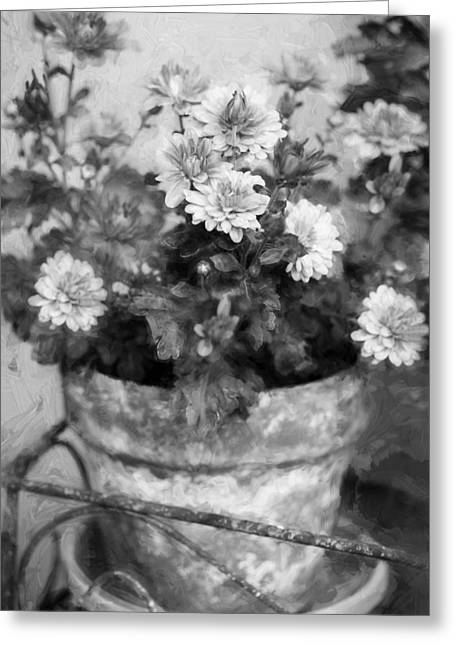 Asters Greeting Cards - Mums Chrysanthemum Painted BW 4 Greeting Card by Rich Franco