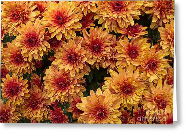 Greeting Cards - Mums the Word Greeting Card by Ann Horn