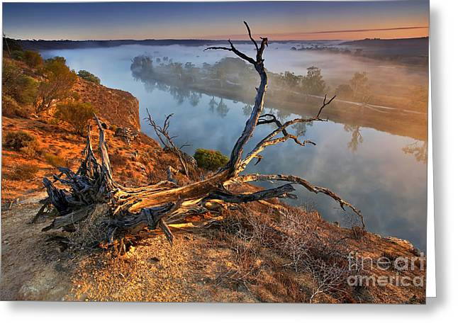 Uproot Greeting Cards - Murray River Dawn Greeting Card by Bill  Robinson