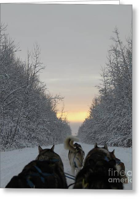 Husky Greeting Cards - Mushing into the Sunset Greeting Card by Tanja Hymel