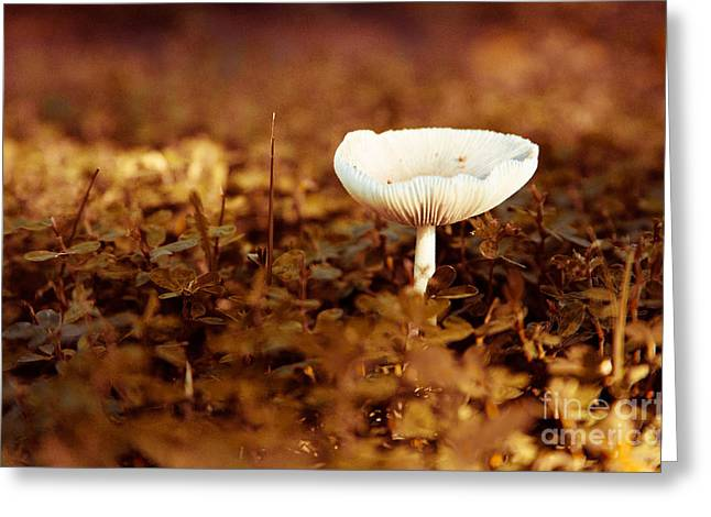Reserve Jewelry Greeting Cards - Mushroom 2 Greeting Card by Heather Roper
