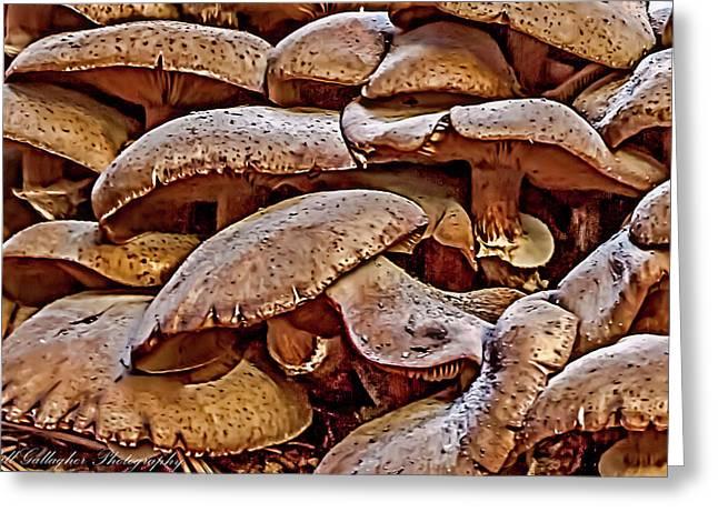 Mushroom Colony Greeting Card by Bill Gallagher