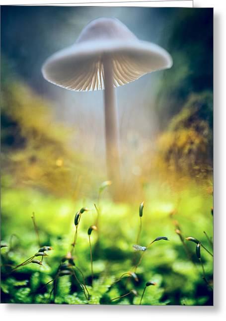 Fungi Greeting Cards - Mushroom Mycena galericulata Greeting Card by Dirk Ercken