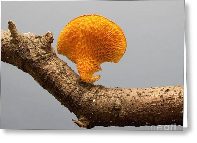Mushroom Greeting Card by Robert Sander