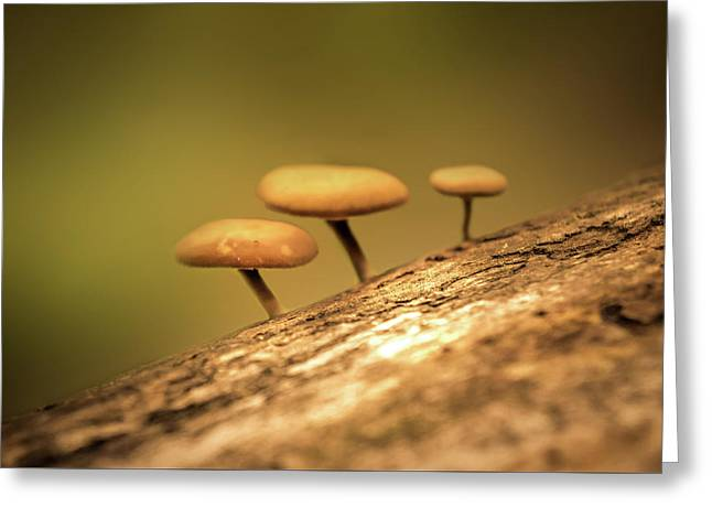 Mushrooms Greeting Card by Art Spectrum