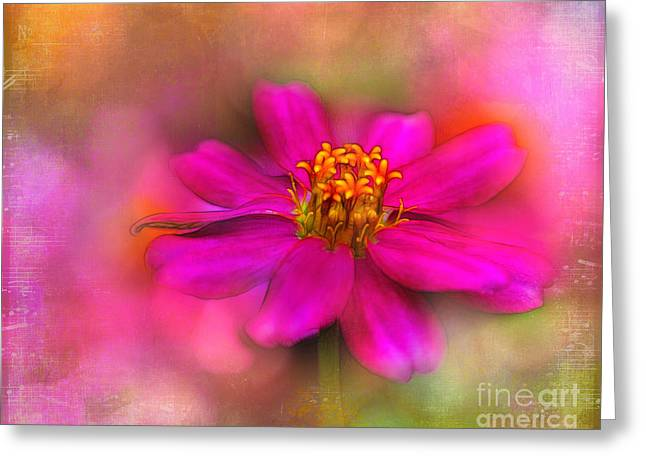 Zinna Greeting Cards - Music in the Garden Greeting Card by Judi Bagwell