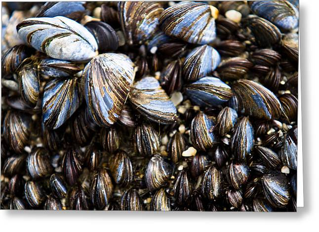 Repeat Greeting Cards - Mussels Greeting Card by Justin Albrecht