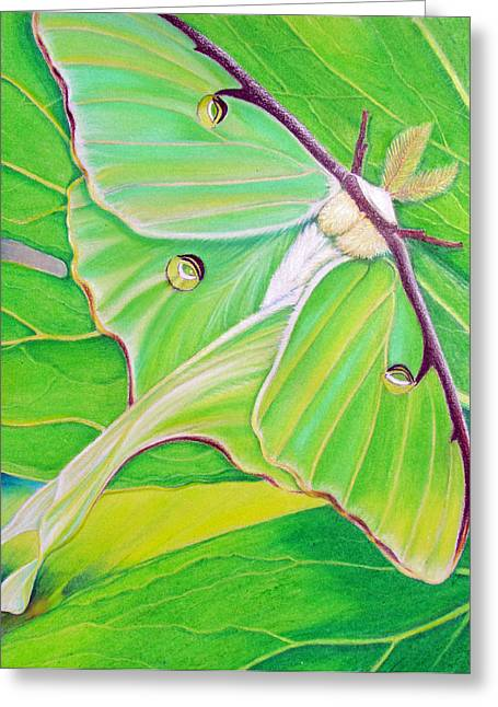 Moth Greeting Cards - Must Be Dreaming Greeting Card by Amy Tyler