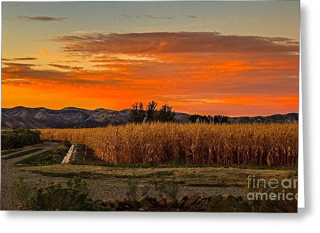 Haybale Greeting Cards - Must Be Fall Greeting Card by Robert Bales