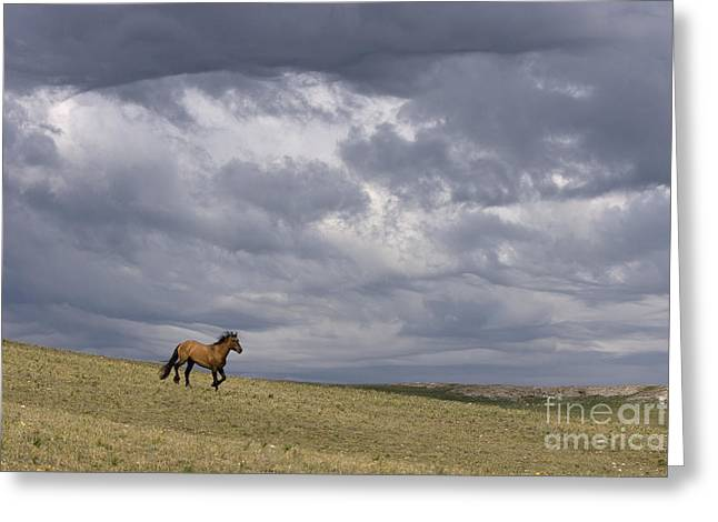 Turbulent Skies Photographs Greeting Cards - Mustang And Stormy Sky Greeting Card by Jean-Louis Klein & Marie-Luce Hubert