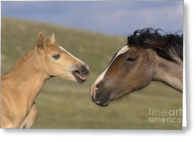 Yearling Horse Greeting Cards - Mustang Foal And Yearling Greeting Card by Jean-Louis Klein & Marie-Luce Hubert