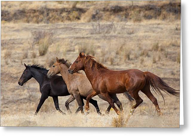 Sagebrush Greeting Cards - Mustang Trio Greeting Card by Mike  Dawson