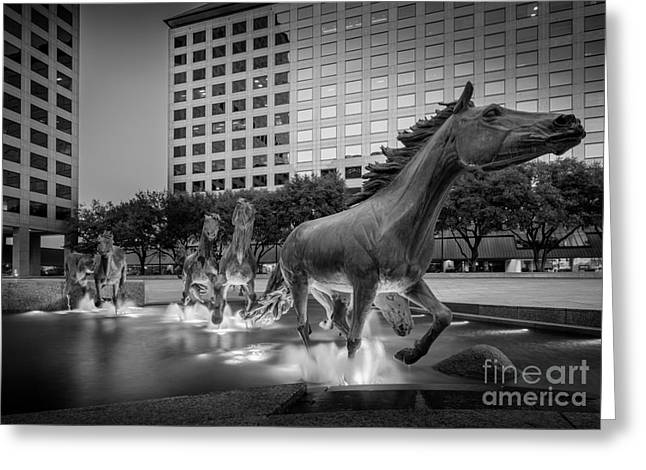 Mustangs At Las Colinas Greeting Card by Inge Johnsson