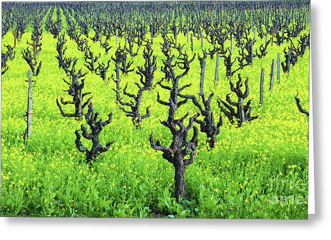 Alexander Valley Greeting Cards - Mustard Flowers in the Vineyards Greeting Card by Charlene Mitchell