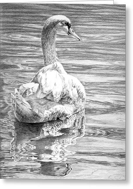 Muted Drawings Greeting Cards - Mute Swan Greeting Card by Craig Carlson