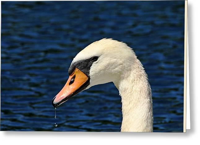 Pen Greeting Cards - Mute Swan Greeting Card by Debbie Oppermann