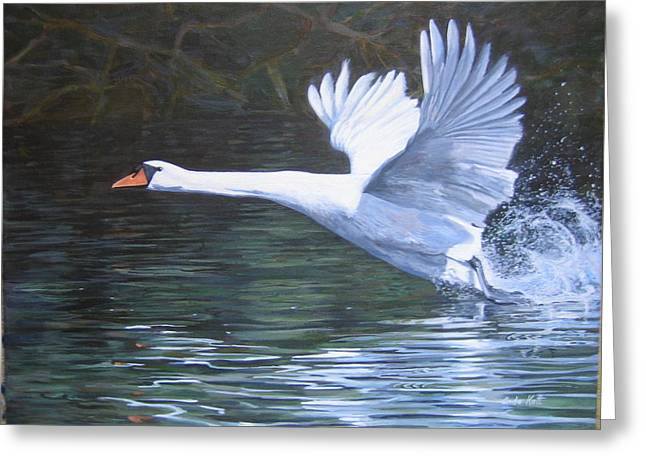 Muted Greeting Cards - Mute Swan Taking Off Greeting Card by Anda Kett