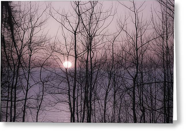 The Nature Center Greeting Cards - Muted Sunset Through the Trees Greeting Card by Tracy Winter