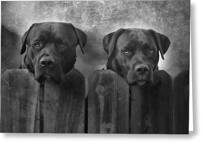 Dogs Photographs Greeting Cards - Mutt and Jeff Greeting Card by Larry Marshall