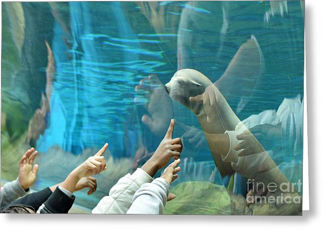 California Sea Lions Greeting Cards - Mutual Attraction Greeting Card by Tim Sevcik