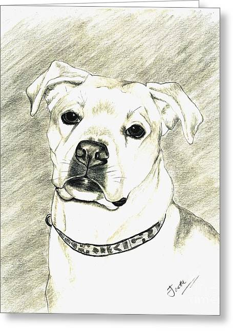 Boxer Drawings Greeting Cards - My Bella Greeting Card by Joette Snyder