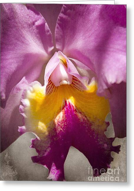 Cattleya Orchid Greeting Cards - My Brilliant Wish Greeting Card by Sharon Mau
