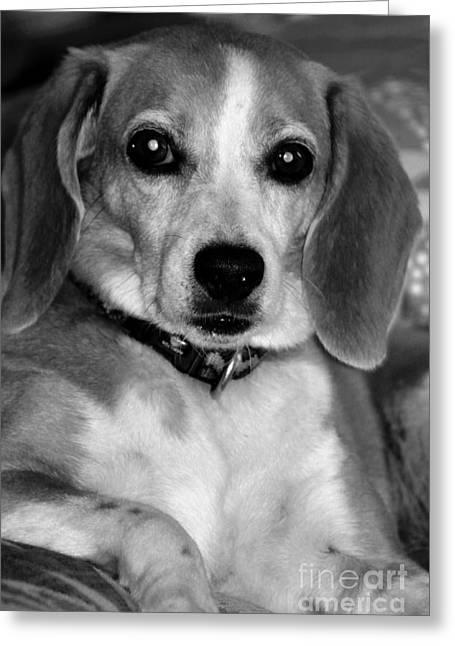 Dogs Digital Greeting Cards - My Buddy Greeting Card by Lori Baumann