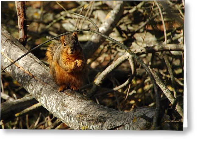 Tree Squirrel Greeting Cards - My Bushy Red Hairdo Greeting Card by Donna Blackhall