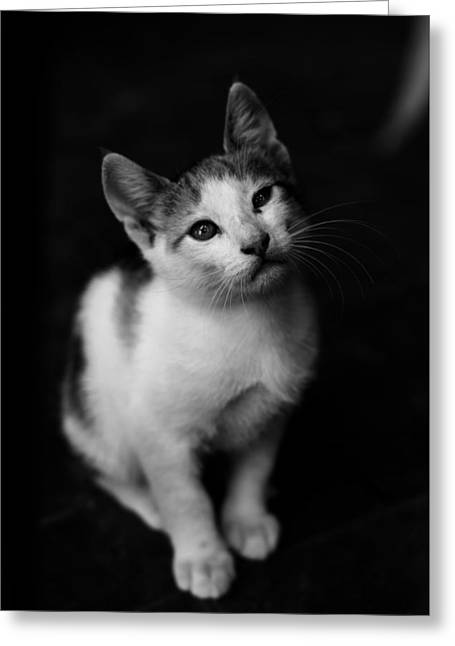 Best Friend Greeting Cards - My cat Greeting Card by Ecograss