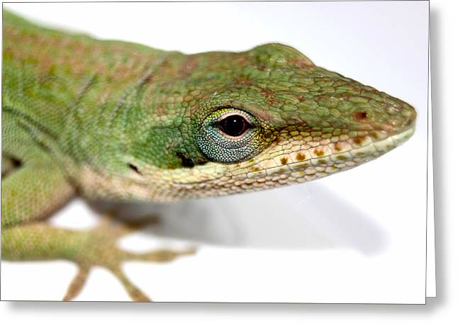 Charlotte Greeting Cards - My Closeup Green Lizard Greeting Card by Morgan Carter