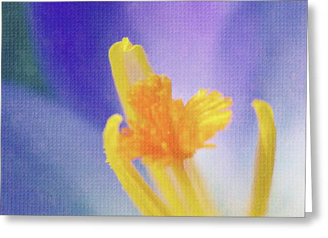 My crocus III Greeting Card by Angela Doelling AD DESIGN Photo and PhotoArt