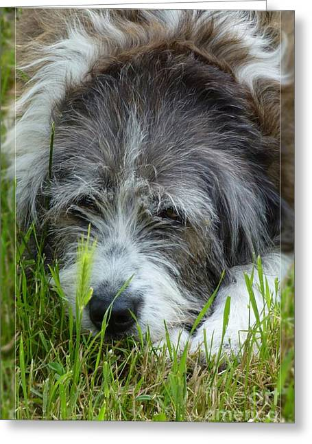 Dogs Digital Greeting Cards - My Dog Greeting Card by Jean Bernard Roussilhe