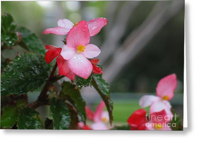 Sun Rays Paintings Greeting Cards - My English Garden 8 Greeting Card by Hazel Holland
