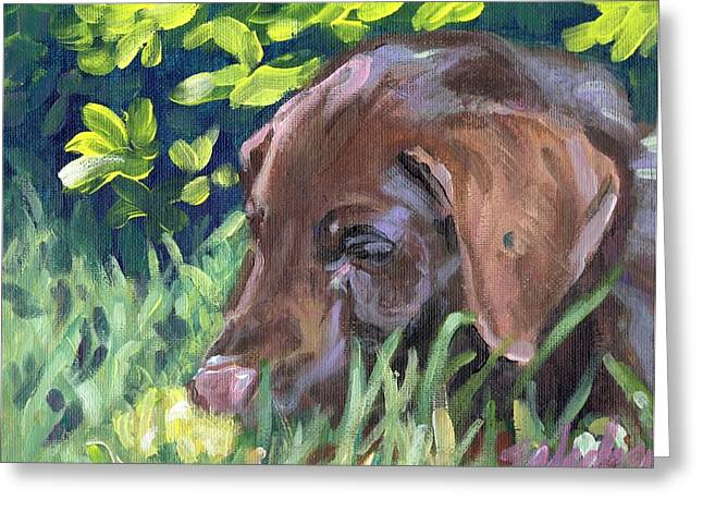 Chocolate Lab Greeting Cards - My Forever Home Greeting Card by Sheila Wedegis