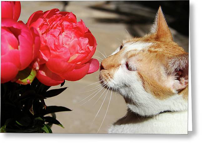 My Kitty In Love With A Peony Greeting Card by Mariola Bitner