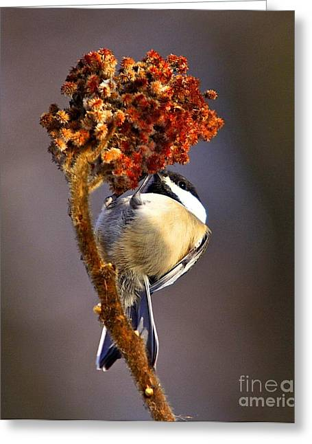 Flying Bird Mixed Media Greeting Cards - My little chickadee Greeting Card by Robert Pearson