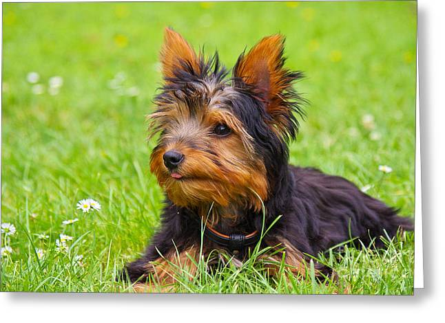 My Little Dog Greeting Card by Angela Doelling AD DESIGN Photo and PhotoArt