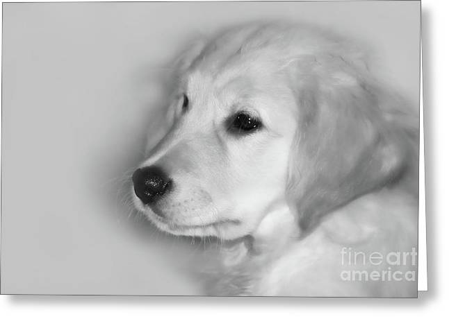 Golden Retriever Digital Greeting Cards - My Mission is Love Greeting Card by Cathy  Beharriell