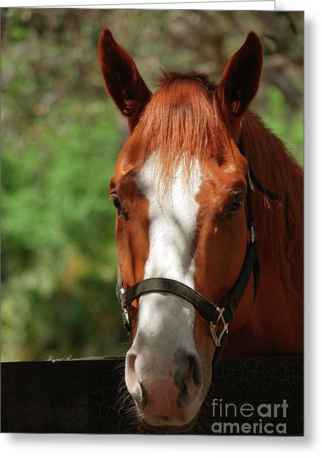 Race Horse Greeting Cards - My new friend Greeting Card by Susanne Van Hulst