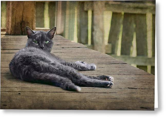 Laziness Greeting Cards - My Porch - Cat Greeting Card by Nikolyn McDonald