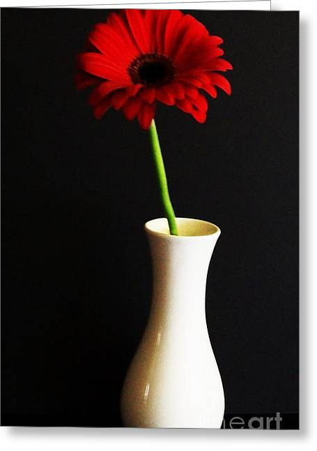 Botony Greeting Cards - My Red Gerber Greeting Card by Marsha Heiken