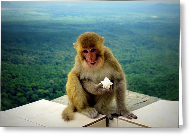 Mount Popa Greeting Cards - My Rice Greeting Card by Scott Brindle