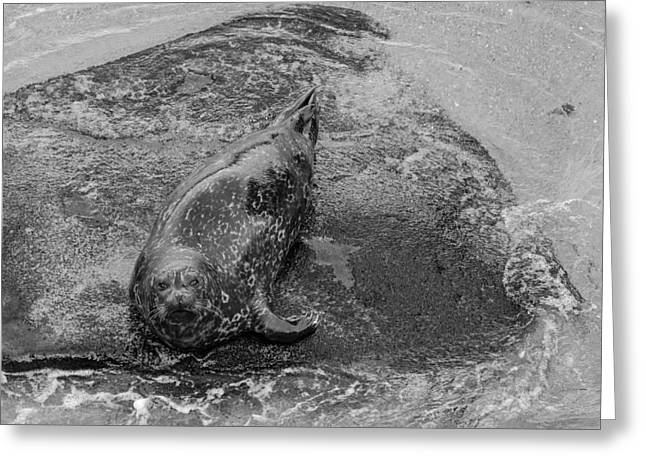 My Ocean Greeting Cards - My Rock Greeting Card by Susan  McMenamin