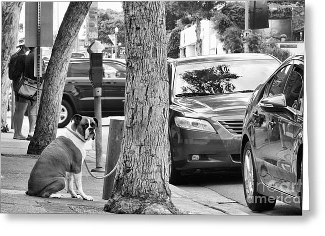 Beach Photography Greeting Cards - My Street, Dude Greeting Card by Vinnie Oakes