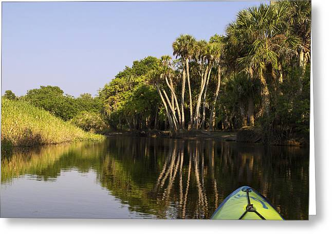 Trees Reflecting In Water Greeting Cards - Myakka River Scene Greeting Card by Sally Weigand