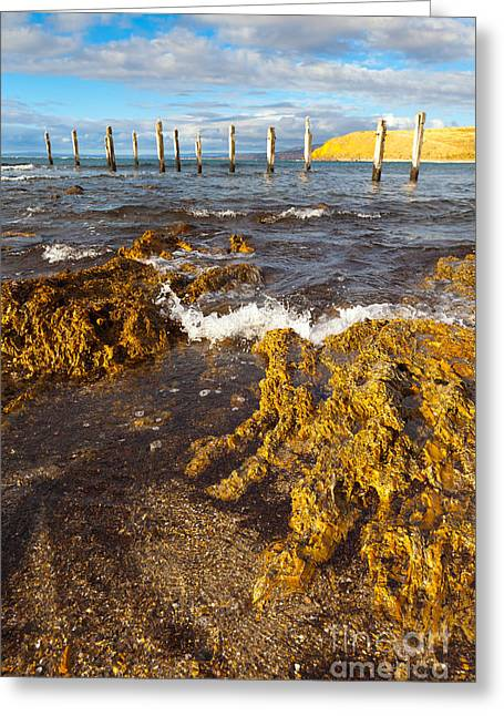 Fleurieu Peninsula Greeting Cards - Myponga Beach Jetty Ruins Greeting Card by Bill  Robinson