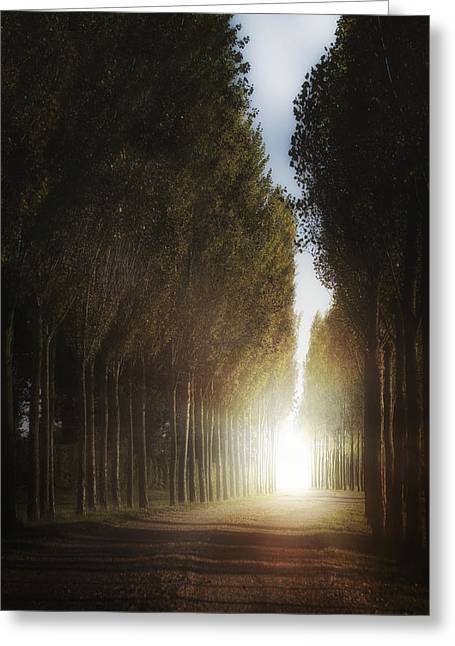 Mysterious Light Greeting Card by Joana Kruse