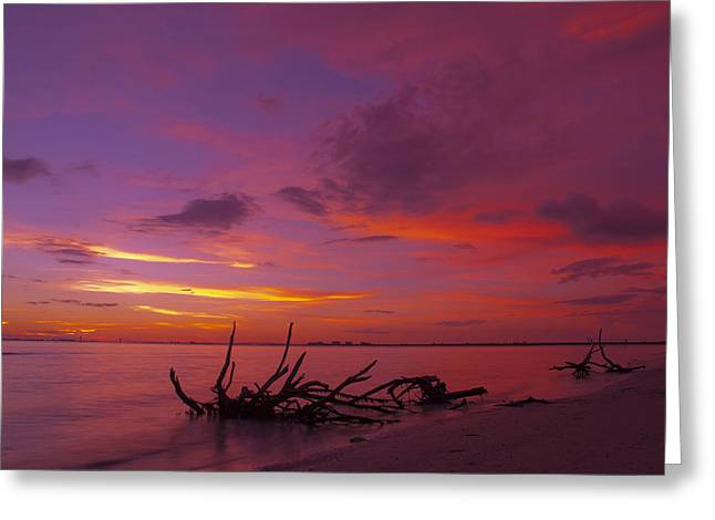 Gulf Of Mexico Scenes Greeting Cards - Mysterious Sunset Greeting Card by Melanie Viola