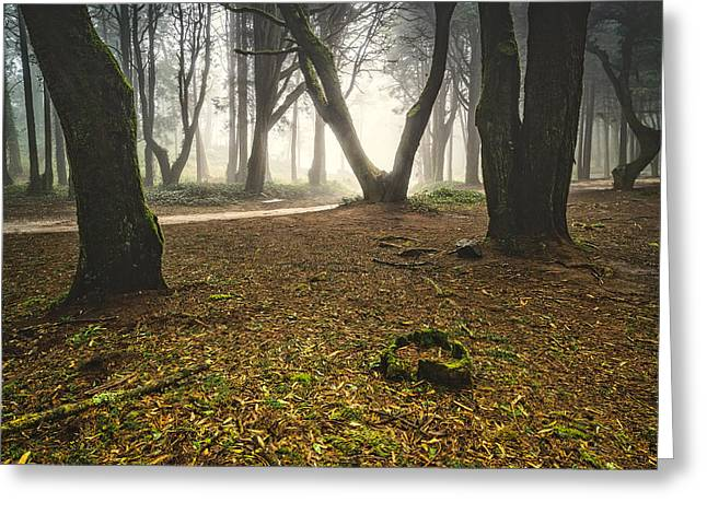 Foggy Day Greeting Cards - Mystic Forest I Greeting Card by Marco Oliveira